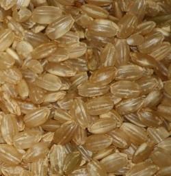 Неочищенный короткозёрный рис